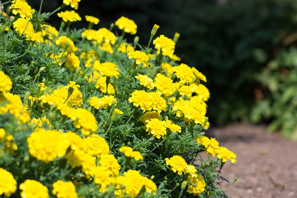 Stock_Flowers2